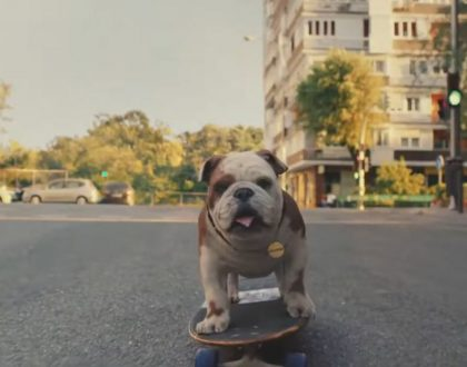 Churchill gets a CGI makeover as brand looks to get its edge back